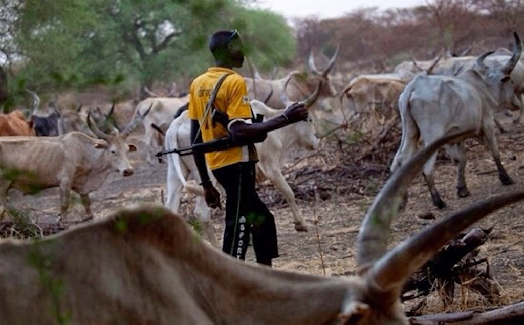 Armed cattle herder