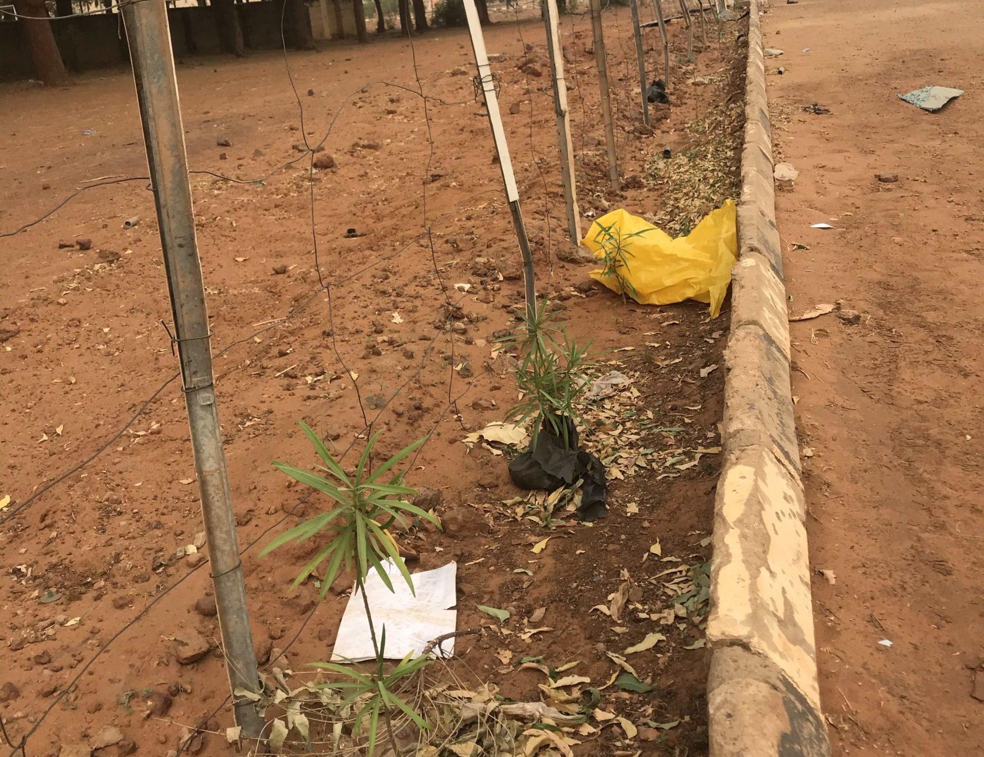 Dirt, dust on flowers at Umaru Ali Shinkafi Polytechnic, Sokoto