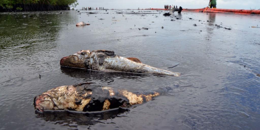 Niger Delta Oil Spill 2