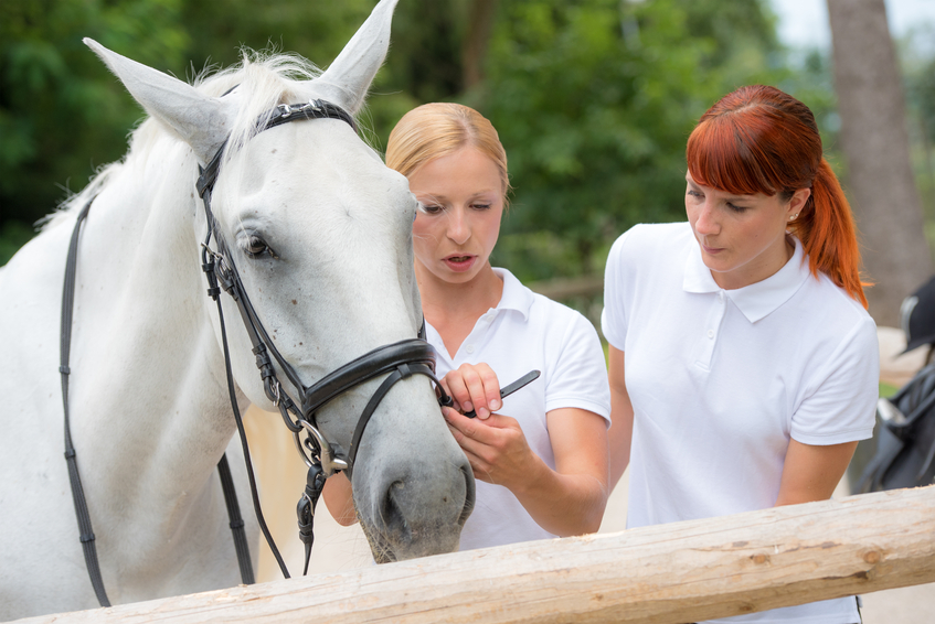 Horse-riding instructor