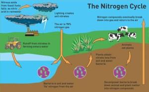 Biogeochemical Cycle And The Nitrogen Cycle Quiz