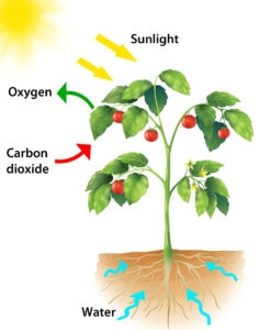 Photosynthesis Test For Year 7 ProProfs Quiz