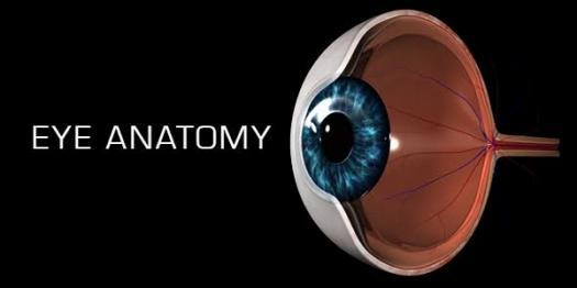 Eye Anatomy Quiz - ProProfs Quiz