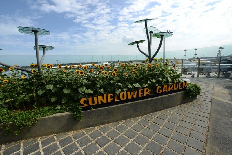 Pe acoperisul terminalului 2, exista o gradina cu floarea-soarelui.