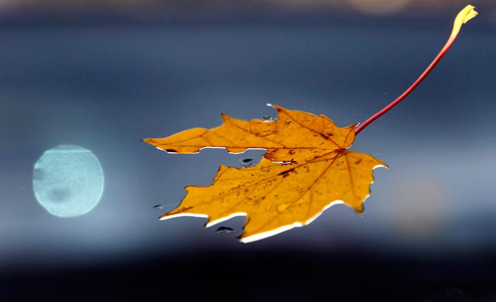 fall_color_01.jpg
