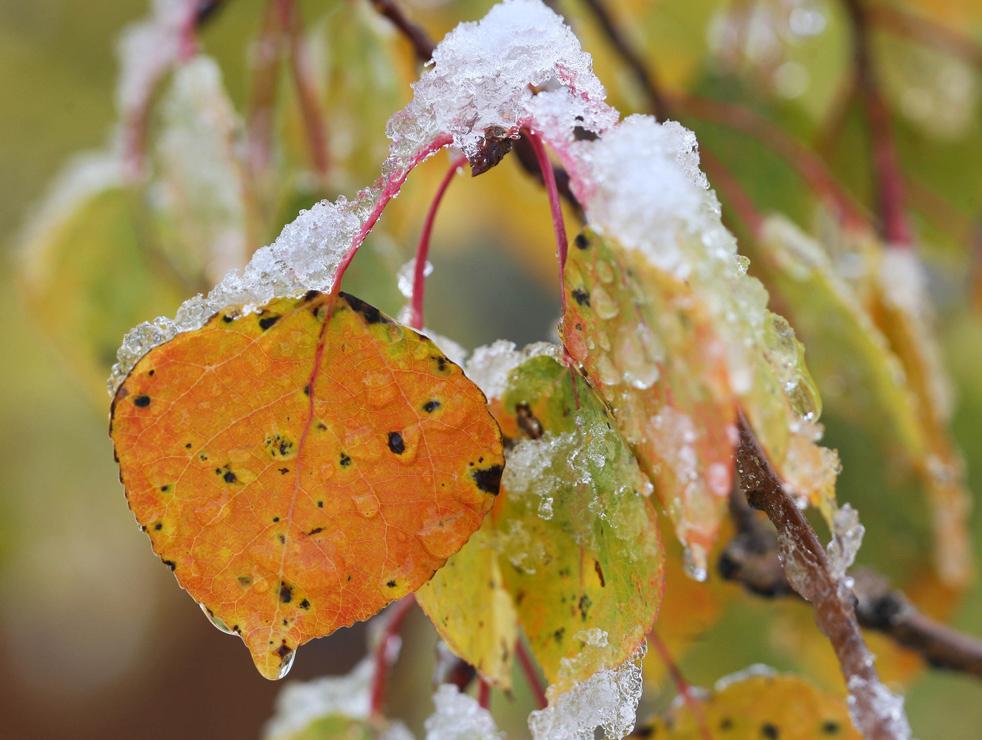fall_color_28.jpg