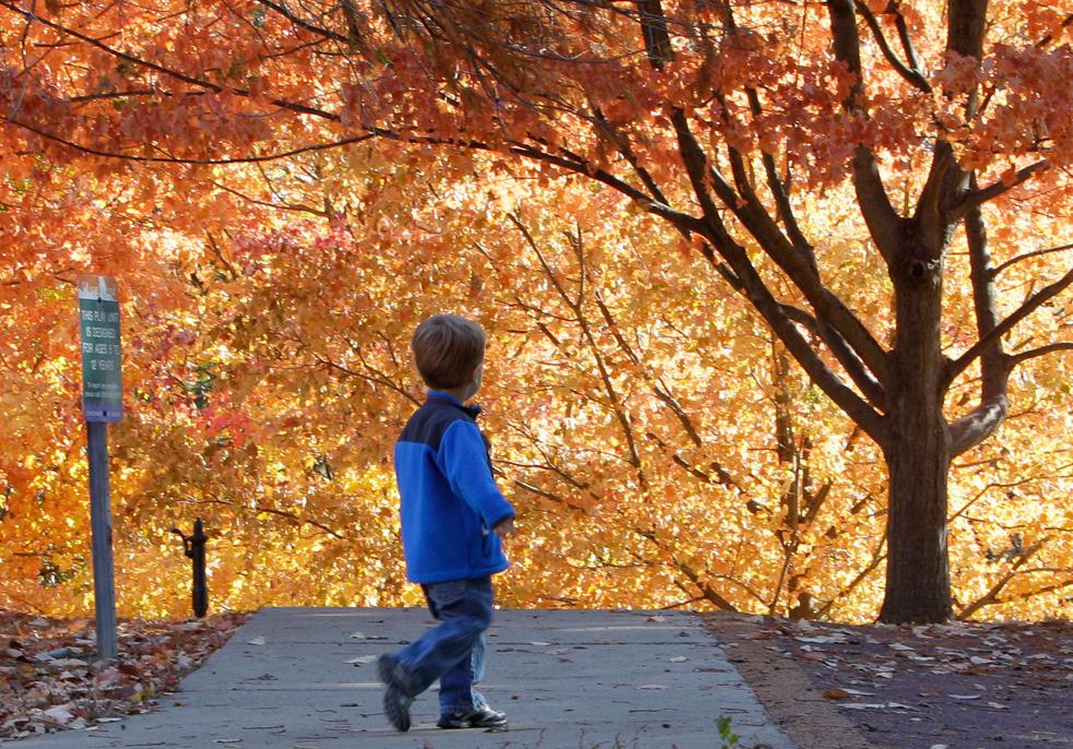 fall_color_38.jpg