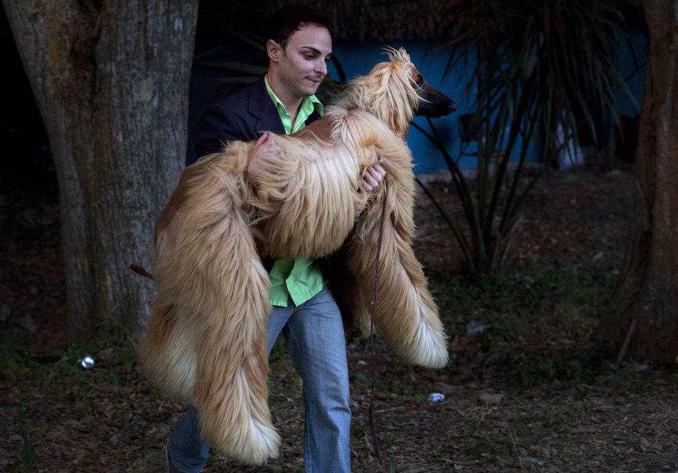 cuba_dog_show_10.jpg