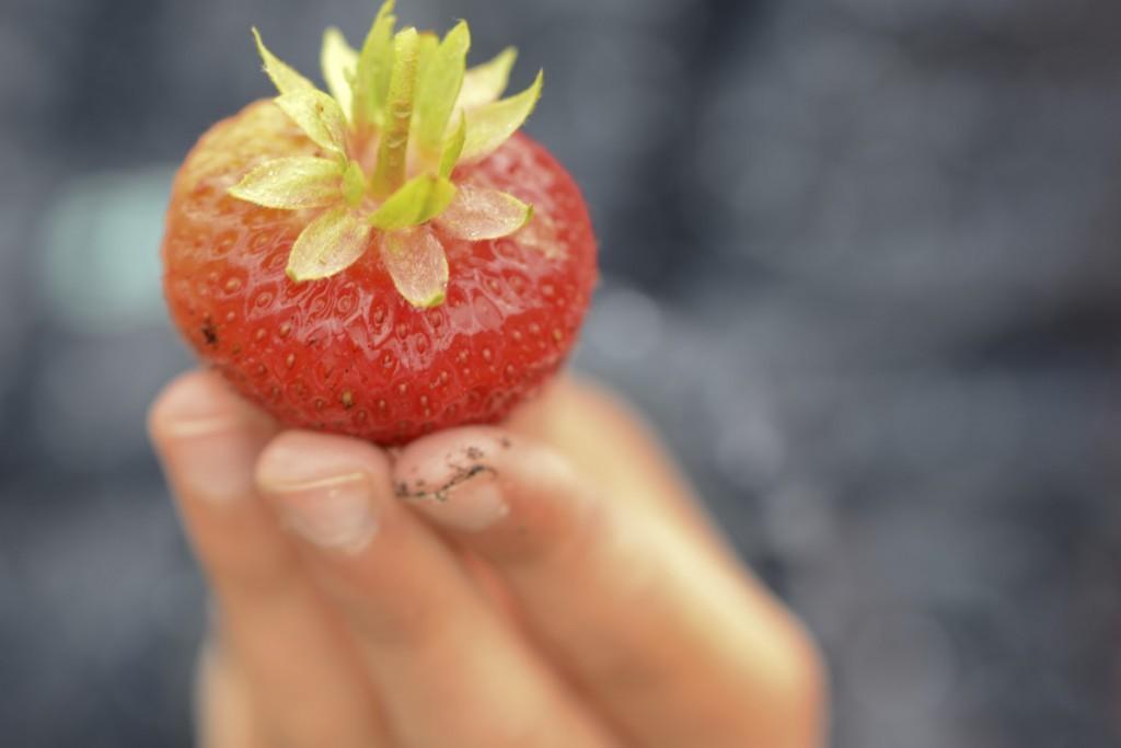 jordgubben