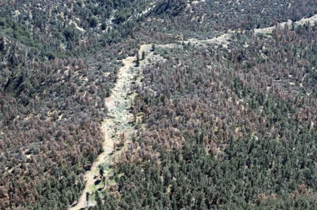 California drought's devastating toll: 12 million trees killed in one year