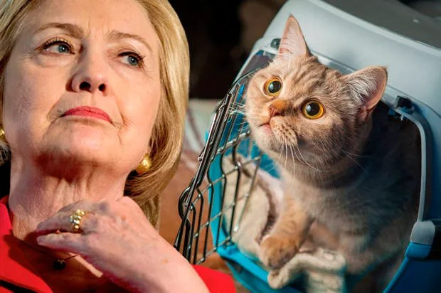 Claws for concern: Hillary Clinton is conveniently vague when it comes to animal rights