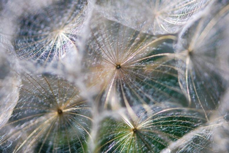 närbild av vissen blomma