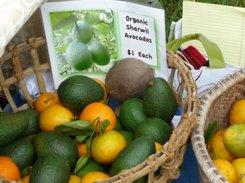 Avocados in Kona, Hawaii
