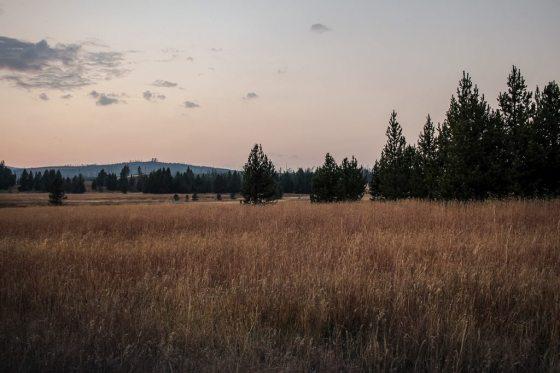 Wyoming Trees