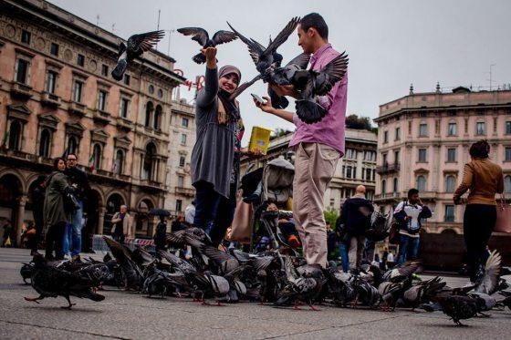 Pigeons in Milan