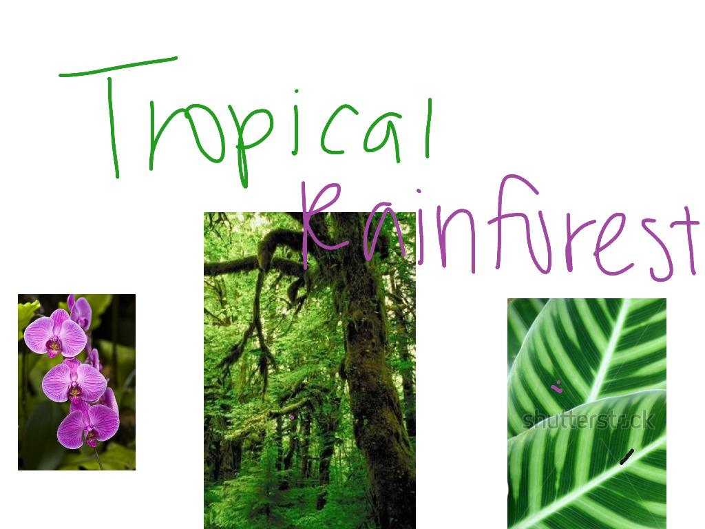 Tropical Rainforest Tropical Rainforest Plant Adaptations