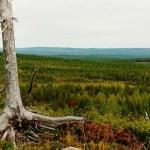 Den här utsikten hittas efter en skogsbilväg öster om Rödingsträsk. Foto: Lilian Mikaelsson