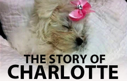 THE STORY OF CHARLOTTE