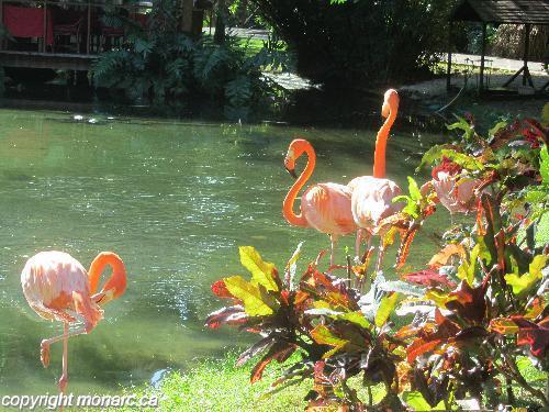 Commentaires pour Blau Natura Park Beach Eco Resort And ...