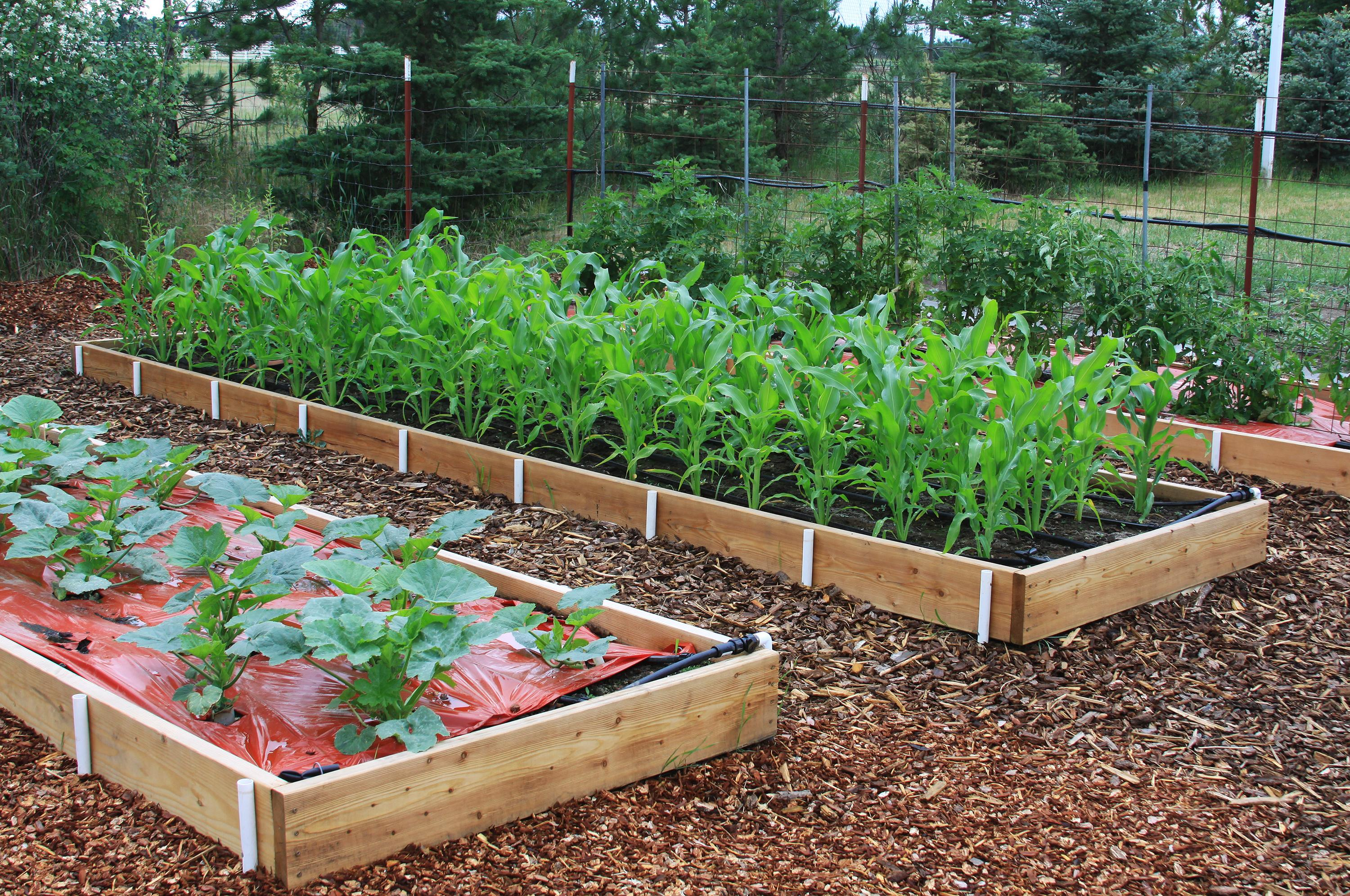 In the Garden: Raised beds offer bountiful benefits | The ... on Raised Patio Designs  id=94621