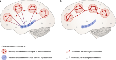 Mechanisms of systems memory consolidation during sleep | Nature ...