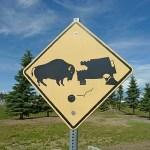 Varning för bufflar! Delta Junction