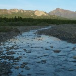 Toklat River. Denali National Park