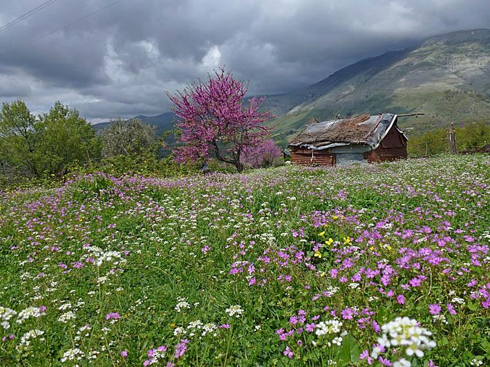 Bergsäng nära Gjirokastra