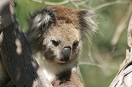 australien-phillip-island_02