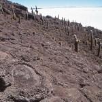 Isla de Pescado, Salar de Uyuni