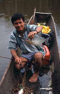 Pirajafiske. Amazonas