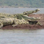 """Crocodile-market"" Lake Chamo"