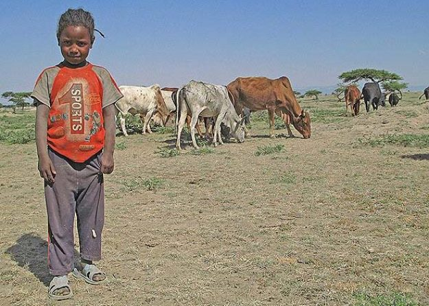 Liten boskapsskötare. Lake Langano