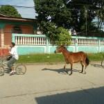Motsträvig häst? Tela