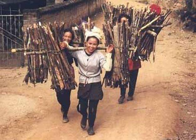 Vedbärande kvinnor. Jinghong