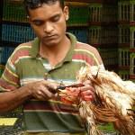 Kycklingslaktare. Kuala Lumpur