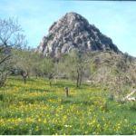 Puig de Caldent. Randa