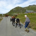 Norwegian cowgirl. Bygdin
