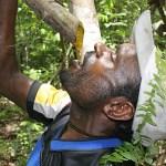 Naturlig malariaprofylax