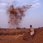 Rensning av bönor. Hadyal