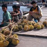 Försäljning av durian. Togianöarna