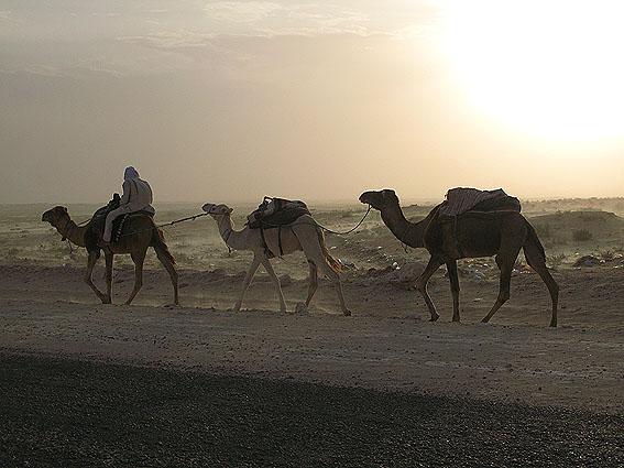 tunisien-douz_05