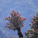 Blommande rhododendron