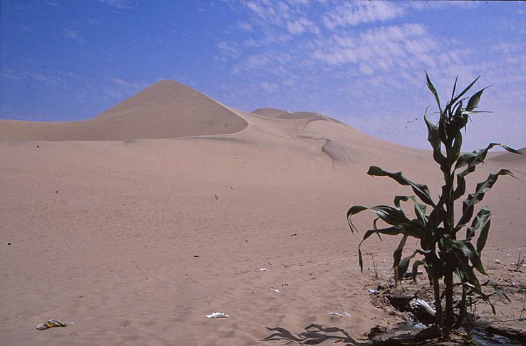 Sanddyner. Pisco