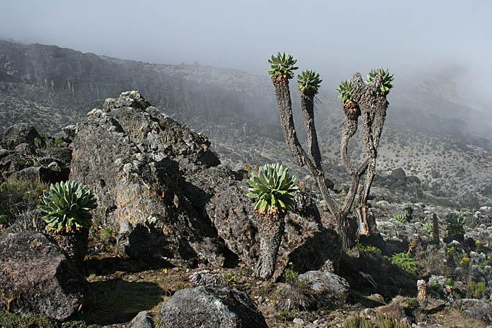 tanzania-kilimanjaro_03