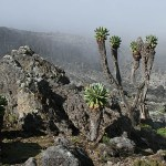 Machame route. Kilimanjaro National park (U)