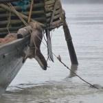Utter på väg till fiske