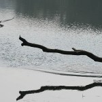 Ormhalsfågel. Chitwan