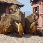 A(p)lusning. Swayambhunath