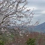 Våren är på väg! San Leo